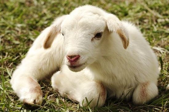Jesus Christ is the Passover Lamb