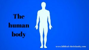 Man: A Tripartite Being with body, soul and spirit