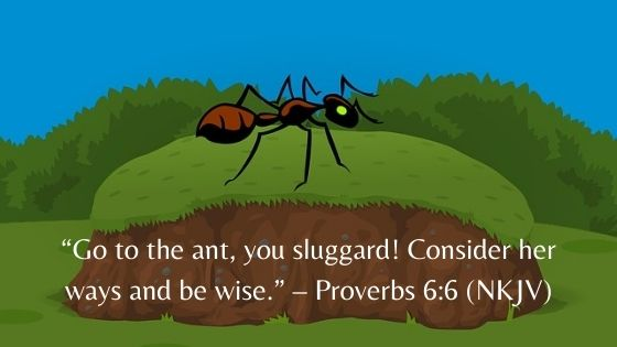 Daily Life Lessons From Proverbs 6